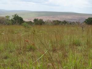 weites Land in Aequatornaehe, ob hier mal Regenwald stand?