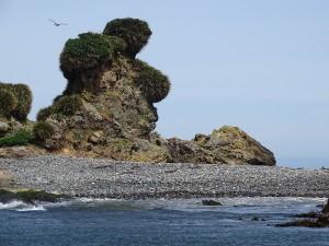 kein Traum, sondern eine natürlich gewachsene Skulptur auf der Insel Chiloe