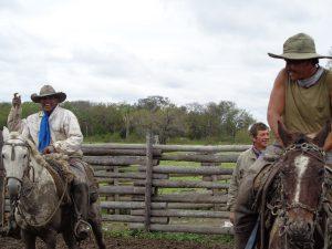 Gauchos bei der Arbeit - viehverladung im Chaco